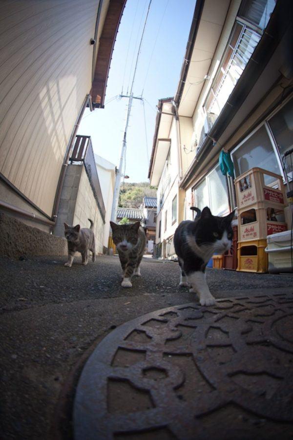 gatos_isla_en_japon