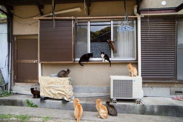 gatos_isla_japon