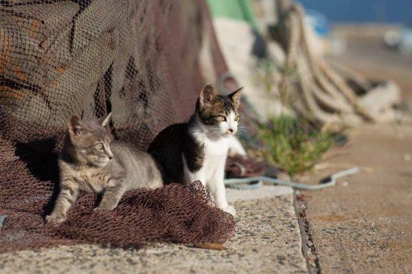 gatos_isla_japonesa