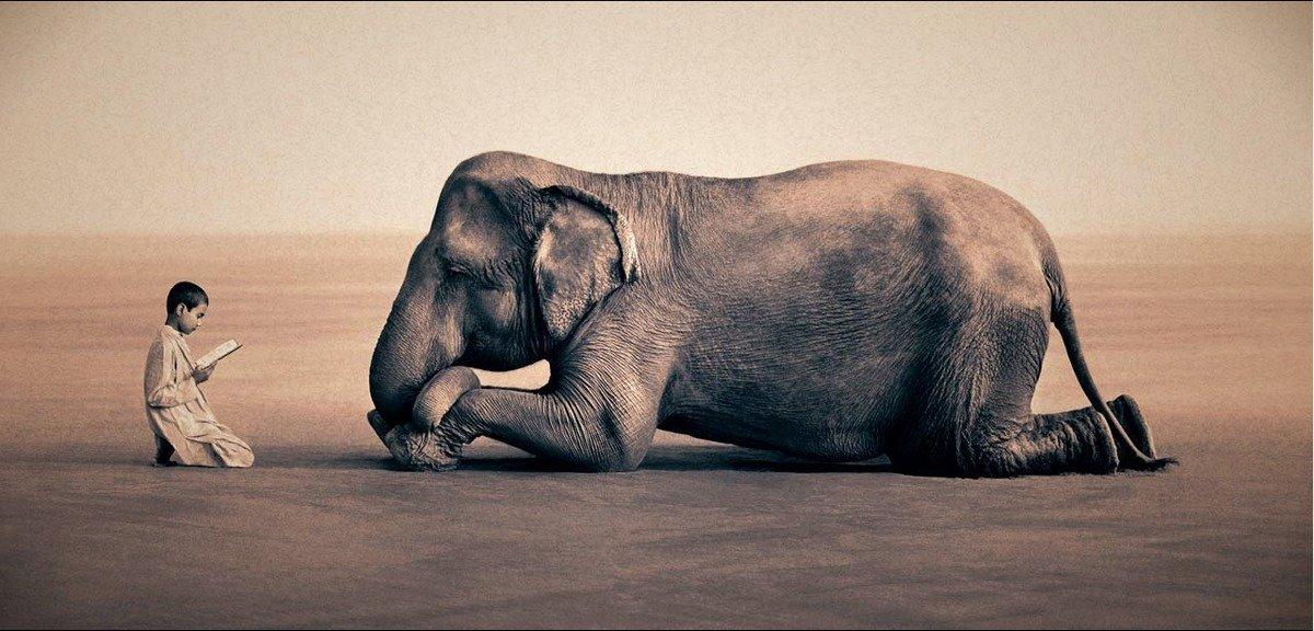 gregory_colbert_elefantes