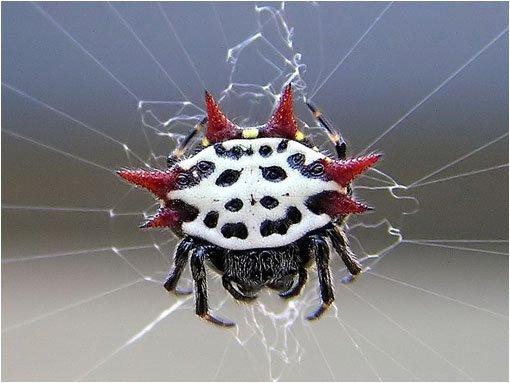 las-mejores-fotos-de-animales-raros-canguro-araña-panadera