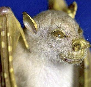 las-mejores-fotos-de-animales-raros-canguro-murcielago-nariz-de-trompeta
