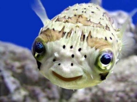 las-mejores-fotos-de-animales-raros-pex-sonrisa
