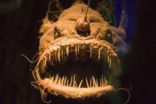 las-mejores-fotos-de-animales-raros-pez-de-las-profundidades