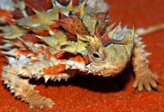 las-mejores-fotos-de-animales-raros-rana-lagarto