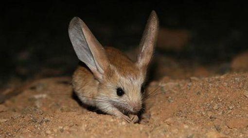 las-mejores-fotos-de-animales-raros-raton-de-campo