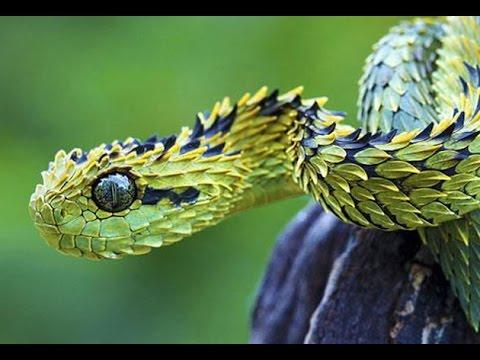 las-mejores-fotos-de-animales-raros-serpiente