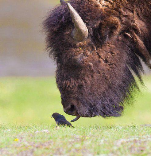 las-mejores-fotos-de-animales-salvajes-diferencia-animales