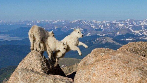 las-mejores-fotos-de-animales-salvajes