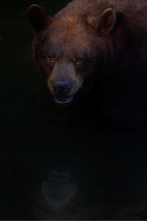 las-mejores-fotos-de-animales-salvajes-oso-salvaje