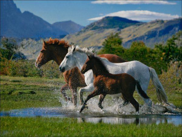 las-mejores-fotos-de-caballos-corriendo-agua