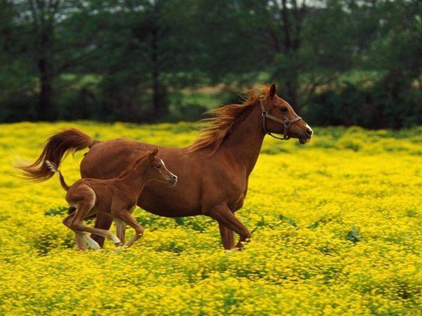 las-mejores-fotos-de-caballos-yegua-y-potrillo