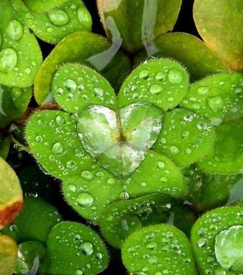 las-mejores-fotos-de-corazones-agua
