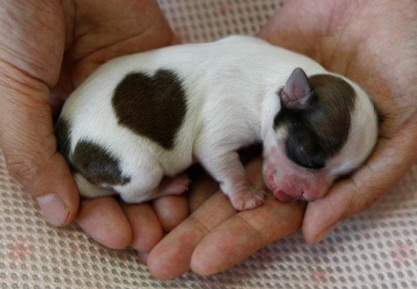 las-mejores-fotos-de-corazones-cachorrito