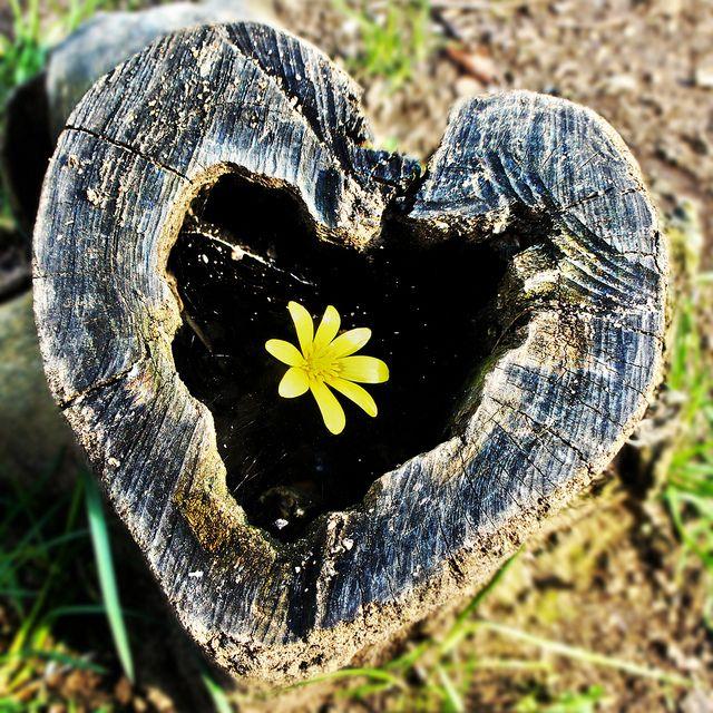 las-mejores-fotos-de-corazones-de-madera