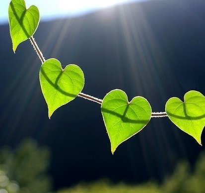 las-mejores-fotos-de-corazones-hojas-al-sol