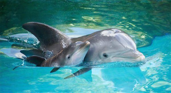 las-mejores-fotos-de-delfines-madre-e-hijo