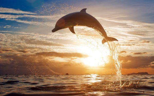 las-mejores-fotos-de-delfines-puesta-de-sol