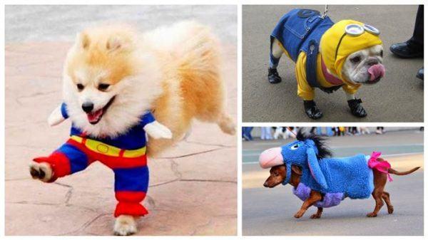 las-mejores-fotos-de-disfraces-para-halloween-2015-disfraces-de-perros