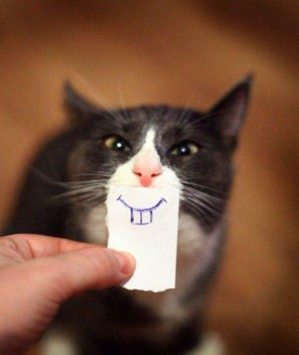 las-mejores-fotos-de-gatos-divertidos