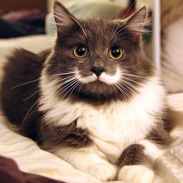 las-mejores-fotos-de-gatos-don-gato