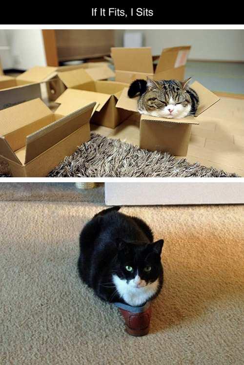las-mejores-fotos-de-gatos-encajados-en-sitios-raros-caja-cara