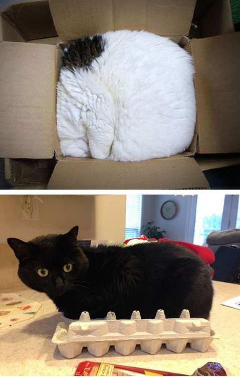 las-mejores-fotos-de-gatos-encajados-en-sitios-raros-caja-cuadrada