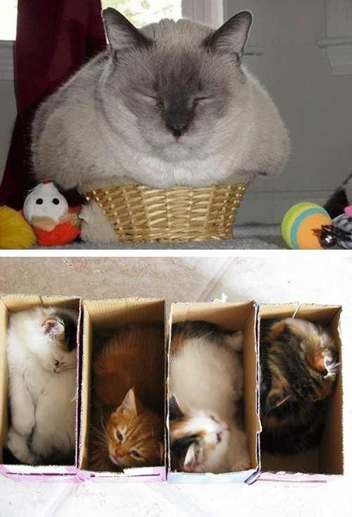 las-mejores-fotos-de-gatos-encajados-en-sitios-raros-cesto-mimbre