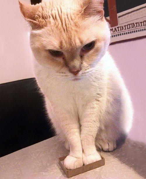 las-mejores-fotos-de-gatos-encajados-en-sitios-raros-dos-patas-carton