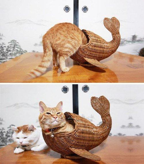 las-mejores-fotos-de-gatos-encajados-en-sitios-raros-pez-mimbre