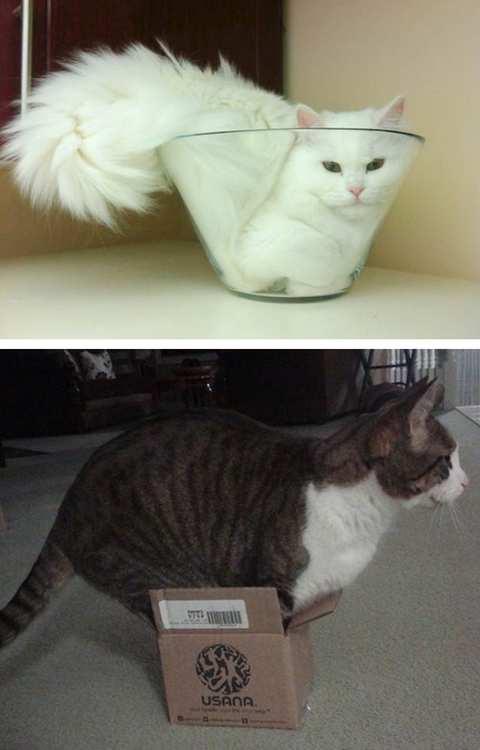 las-mejores-fotos-de-gatos-encajados-en-sitios-raros-recipiente-cristal
