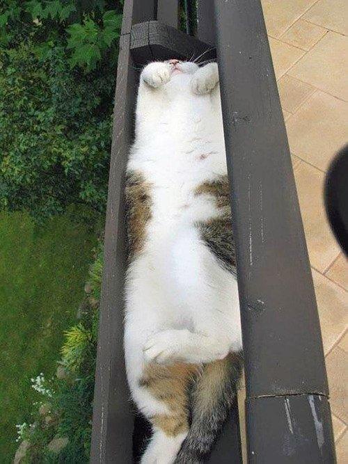 las-mejores-fotos-de-gatos-encajados-en-sitios-raros