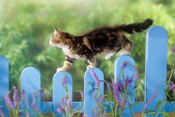las-mejores-fotos-de-gatos-equilibirstas