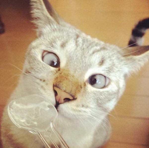 las-mejores-fotos-de-gatos-esta-por-mama