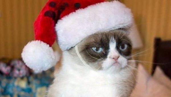 las-mejores-fotos-de-gatos-grumpy