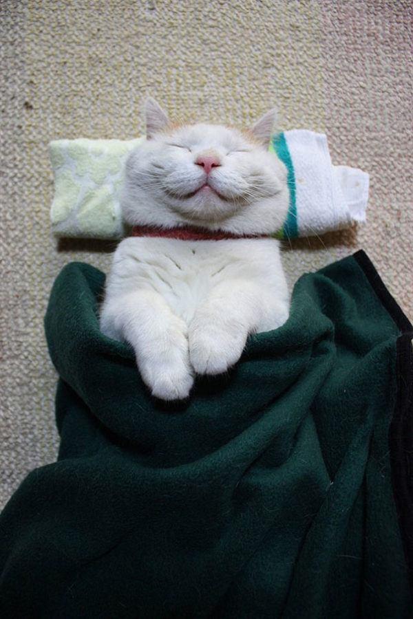 las-mejores-fotos-de-gatos-les-gusta-dormir