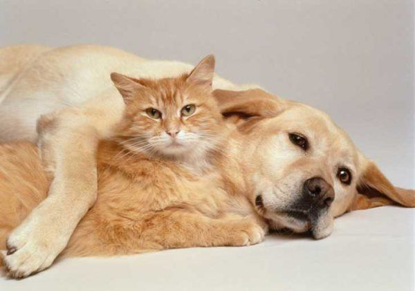 las-mejores-fotos-de-gatos-mejor-amigo