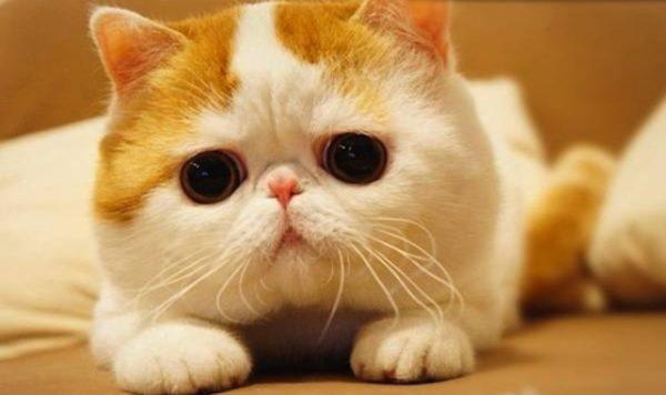 las-mejores-fotos-de-gatos-mirada-dulce
