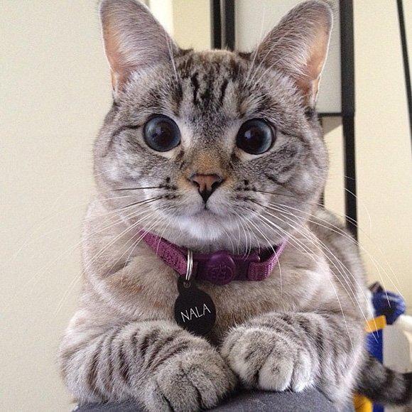 las-mejores-fotos-de-gatos-nala