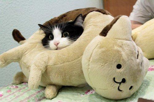 las-mejores-fotos-de-gatos-peluche