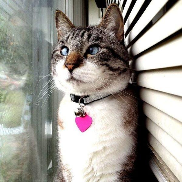 las-mejores-fotos-de-gatos-ventana
