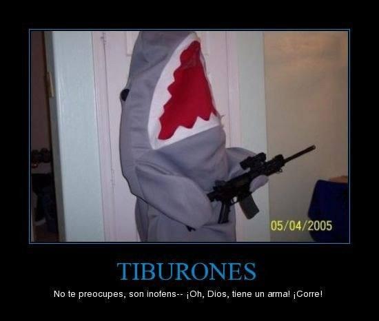 las-mejores-fotos-de-humor-tiburon