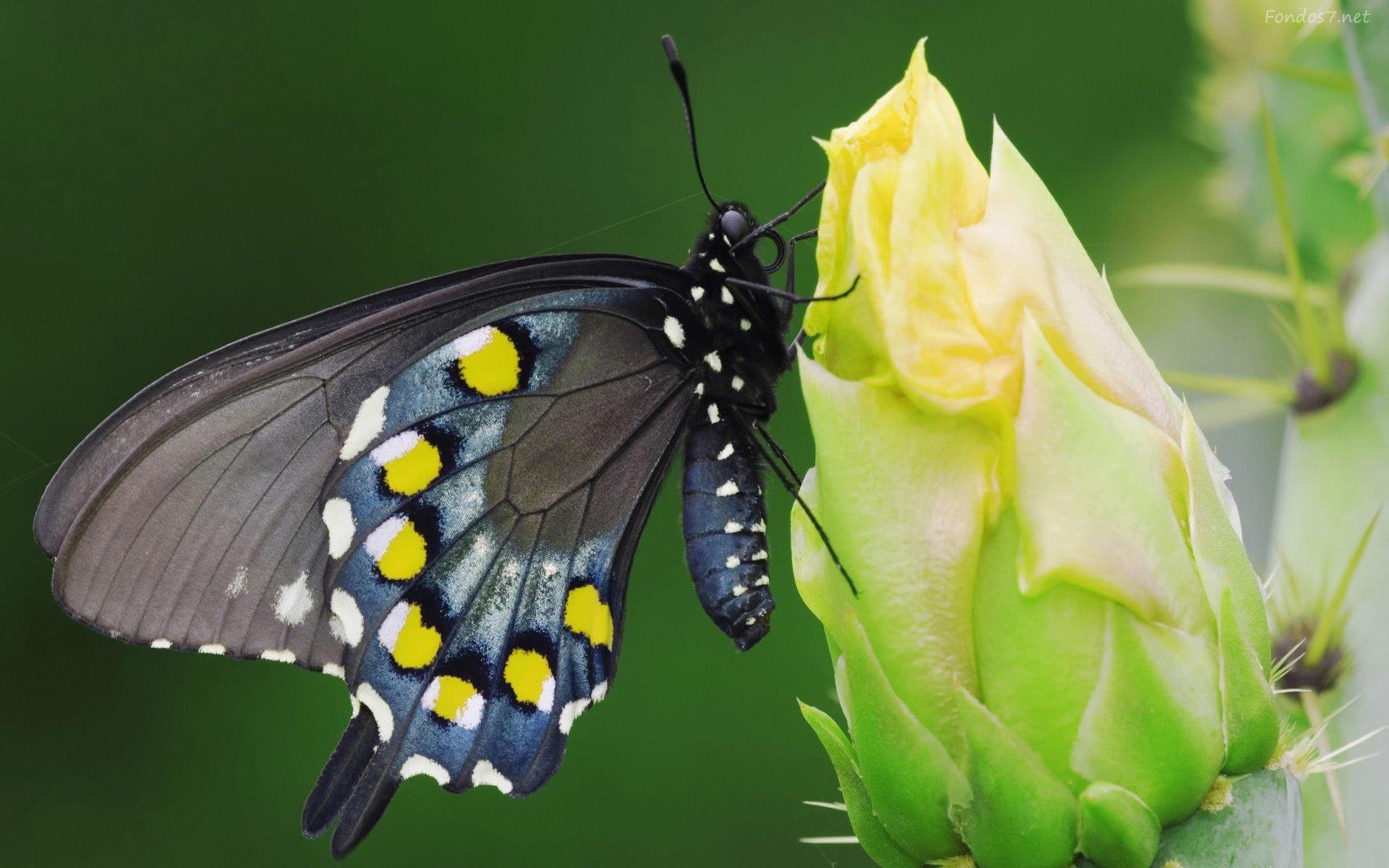 las-mejores-fotos-de-mariposas-con-flor