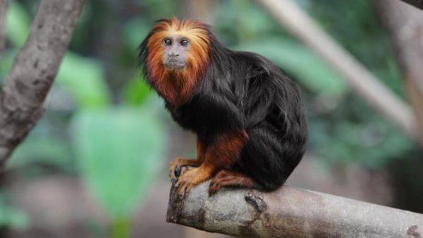 las-mejores-fotos-de-monos-arbol