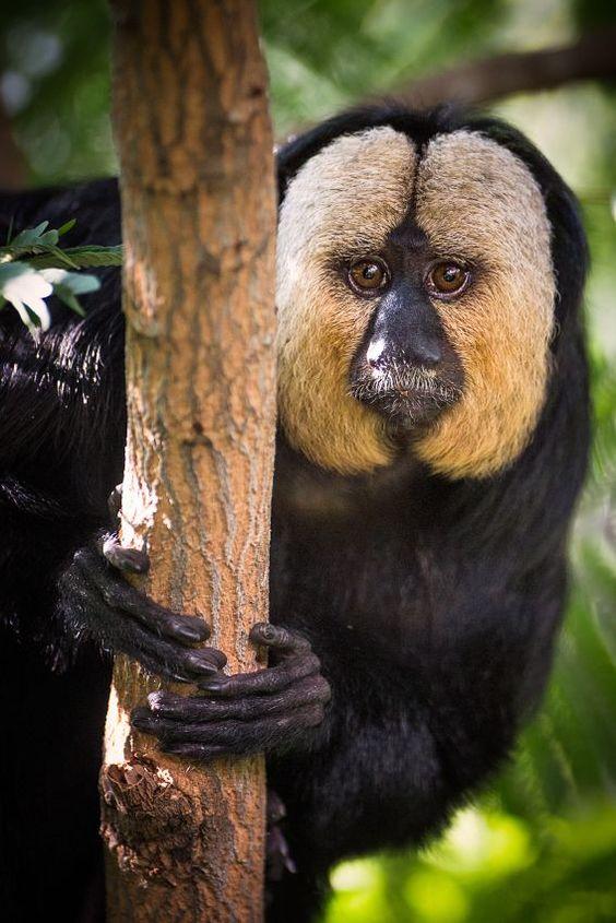las-mejores-fotos-de-monos-asomado