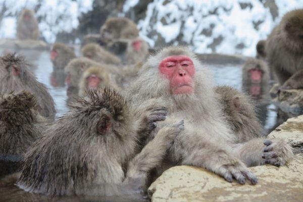 las-mejores-fotos-de-monos-baño