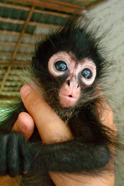 las-mejores-fotos-de-monos-pelos