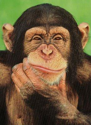 las-mejores-fotos-de-monos-pensando