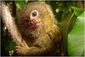 las-mejores-fotos-de-monos-rubio