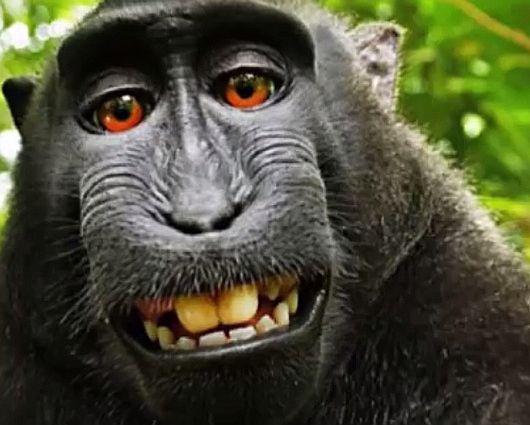 las-mejores-fotos-de-monos-selfie